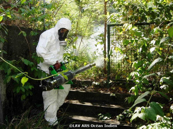 dengue seychelles