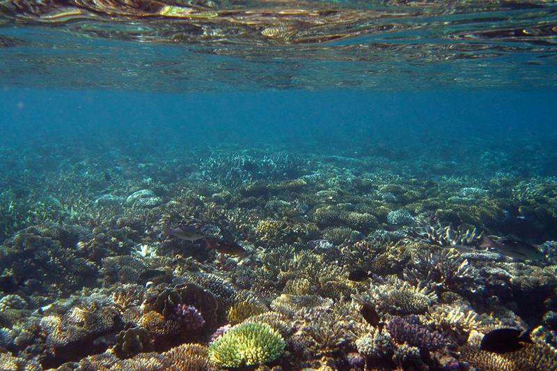 récifs-coraliens
