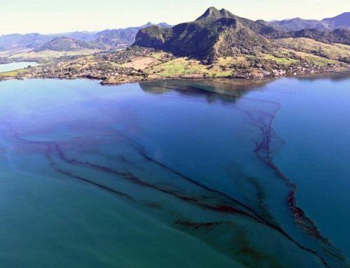 Marée noire à Maurice : que fait la COI ?