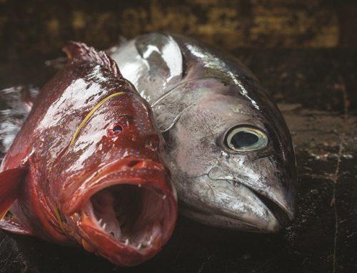 Coopération régionale: La pêche durable à l'honneur