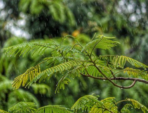 SWIOCOF-10 | Température, précipitations, activité cyclonique : à quoi s'attendre pour la prochaine saison ?